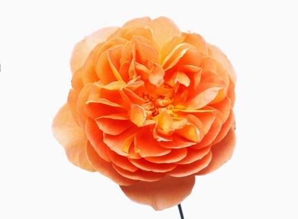 3-bloom